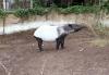 Zoo Leipzig: Start in die Sommersaison